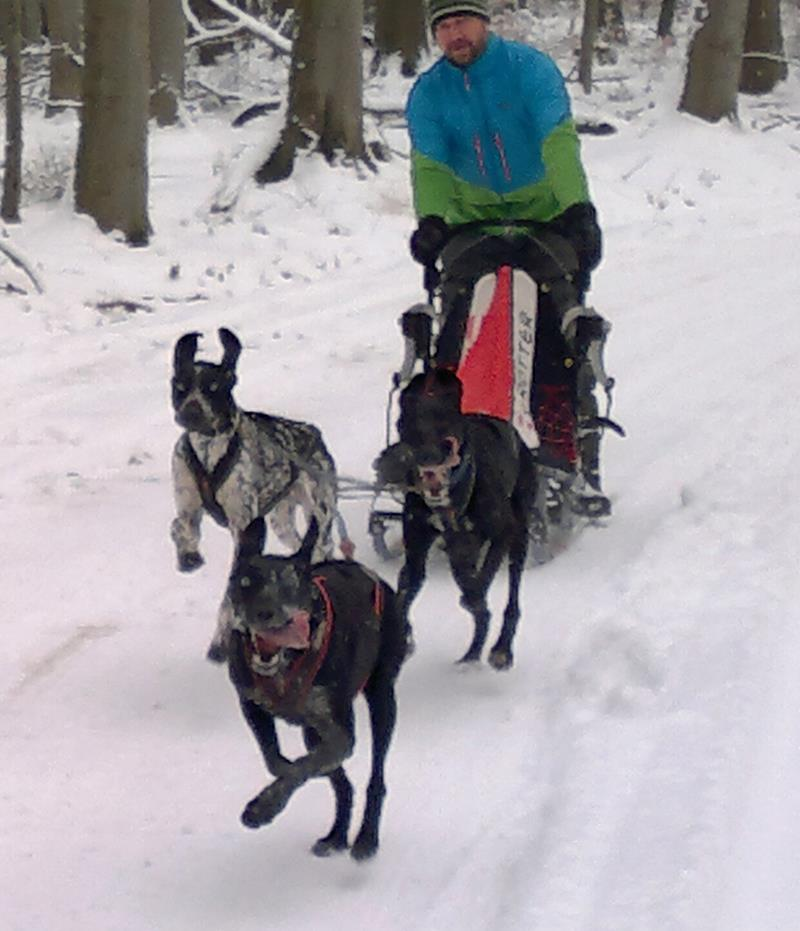 unsere #Bikejöring Hunde vor dem Schlitten