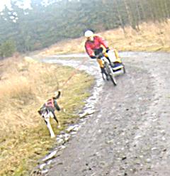 #Bikejöring mit Kind und Kegel